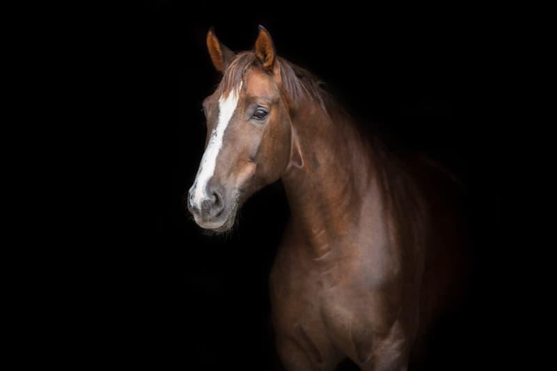 Nature Story: #4 Horses