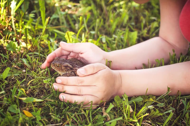 Culture Story: Myth Touching a toad can give you warts