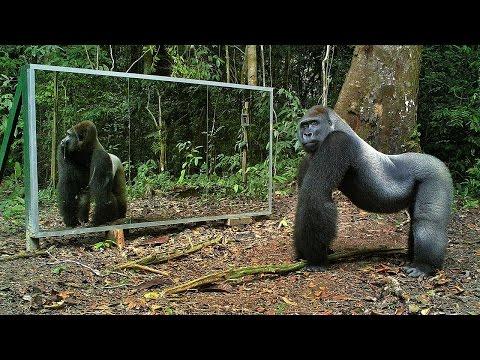 География Story: Забавная и неожиданная реакция животных на своё отражение в зеркале!