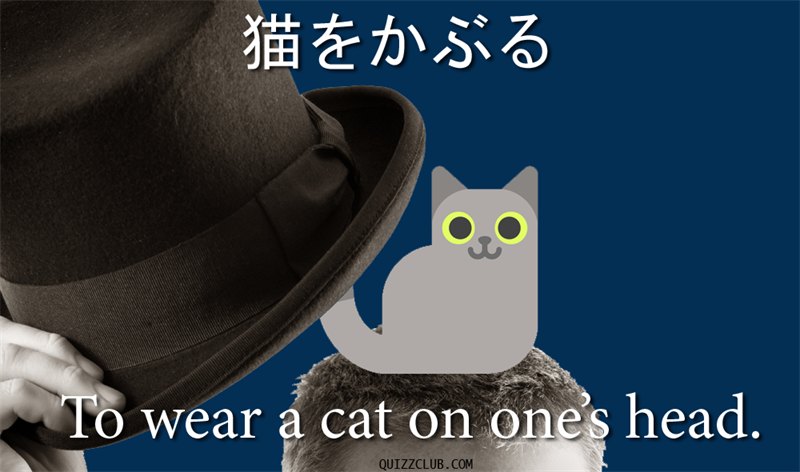 Culture Story: To wear a cat on one's head