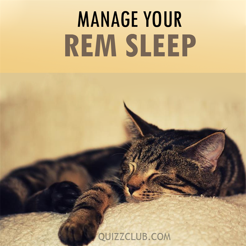 Science Story: Do you know what REM is? It stands for rapid eye movement.