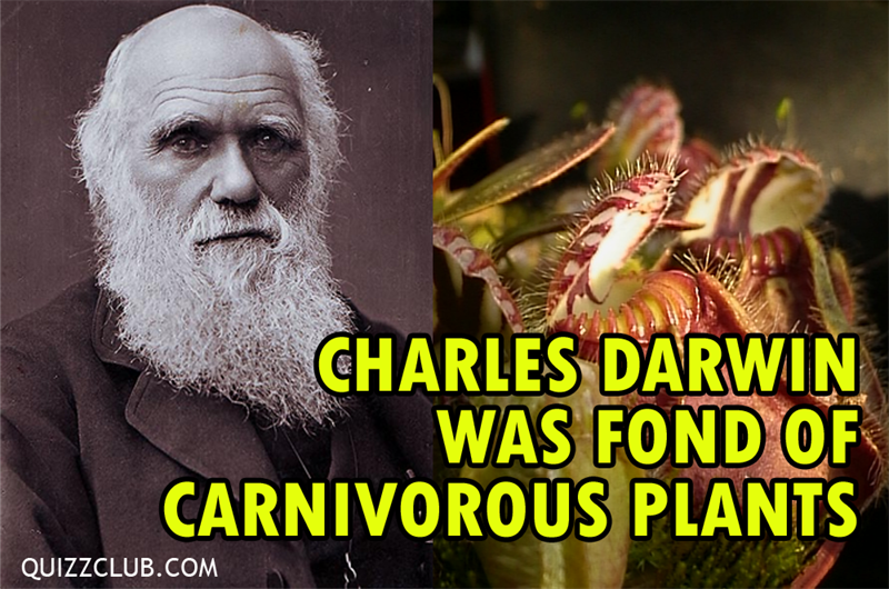 Science Story: 7 unbelievable facts about a creepy carnivorous plant #1 .