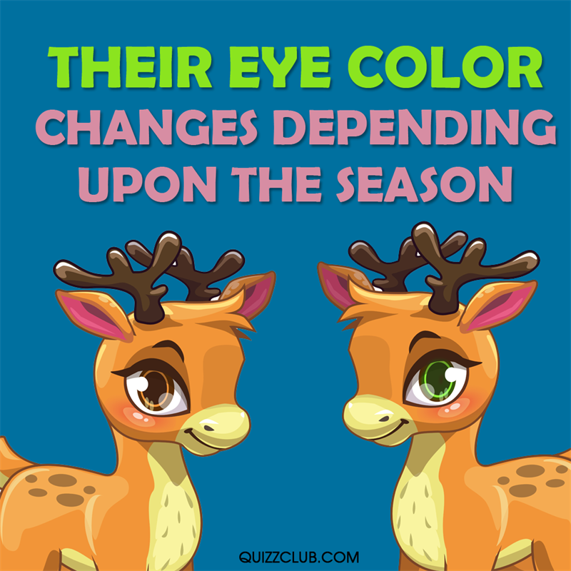 Culture Story: Their eye color changes depending upon the season