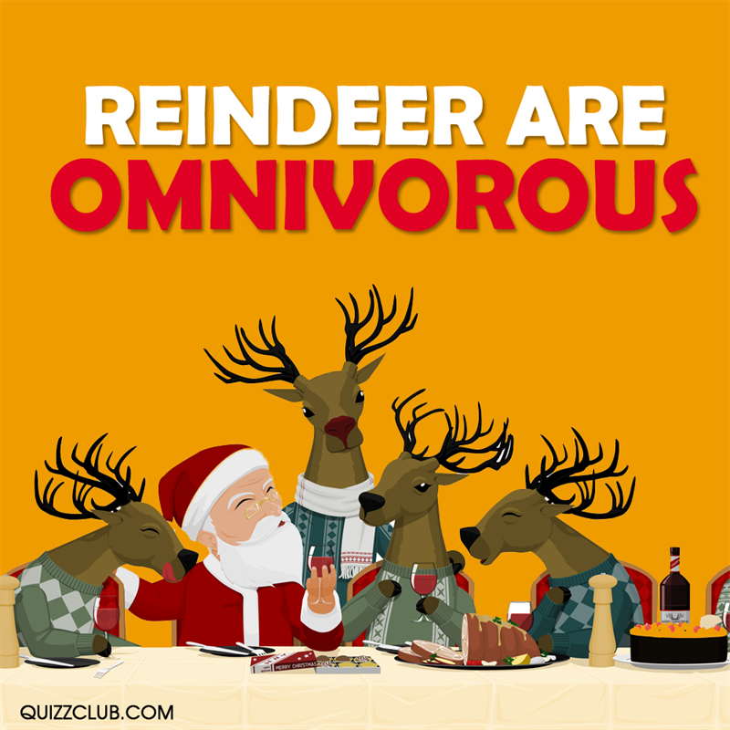 Culture Story: Reindeer are omnivorous