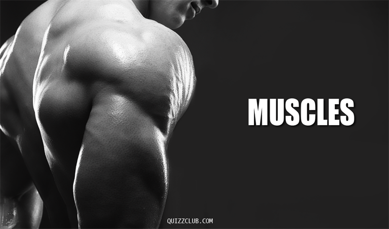 Culture Story: Muscles