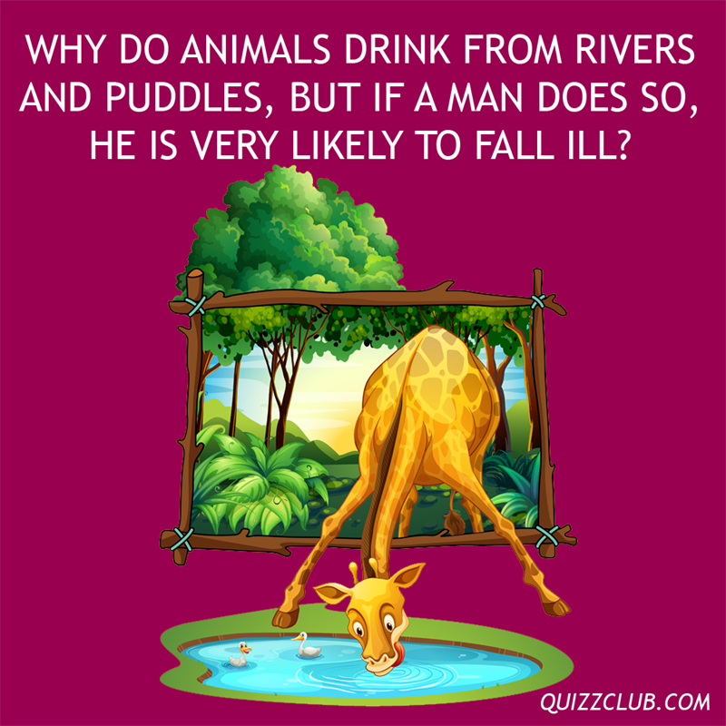 Culture Story: Why do animals drink from rivers and puddles, but if a man does so, he is very likely to fall ill?