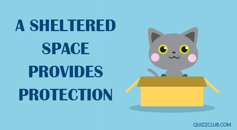 Science Story: A sheltered space provides protection