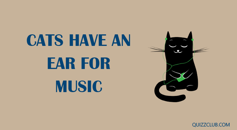 Science Story: Cats have an ear for music