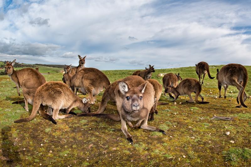 Geography Story: #5 Kangaroo island