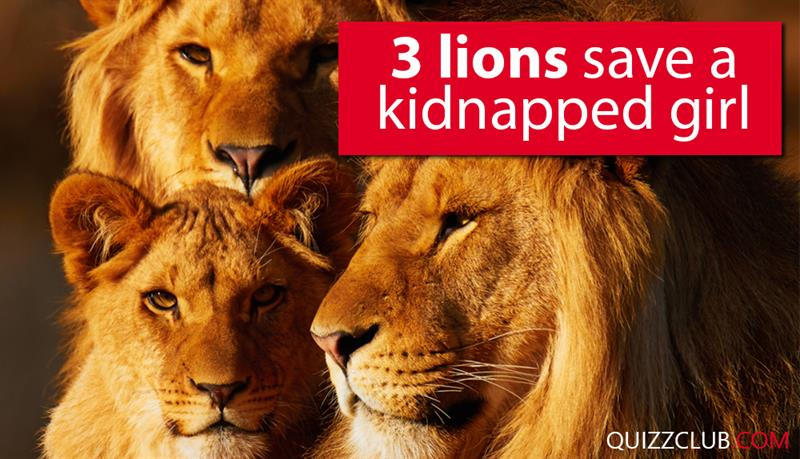 Society Story: 3 lions saves a kidnapped girl