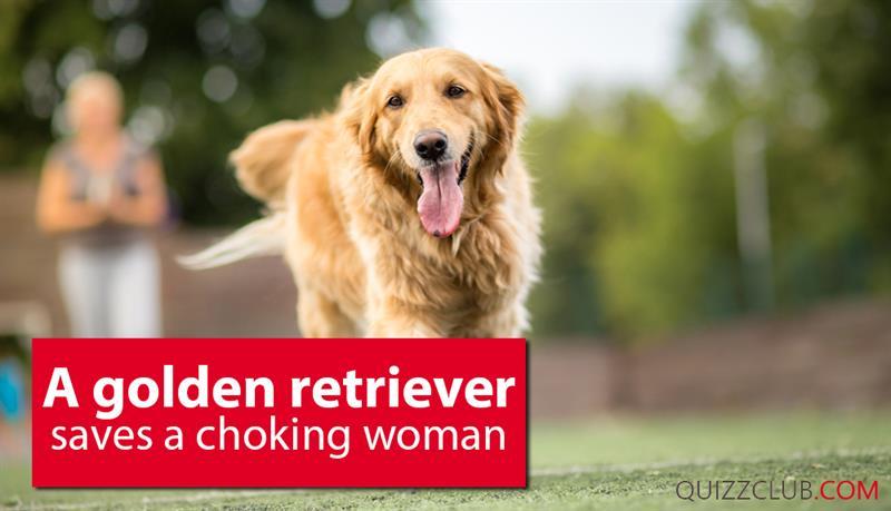 Society Story: A Golden Retriever saves a choking woman
