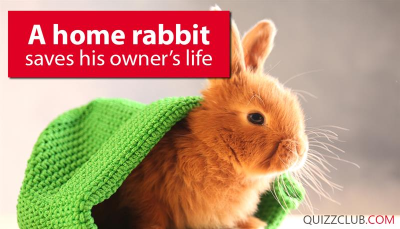 Society Story: A home rabbit saves his owner's life