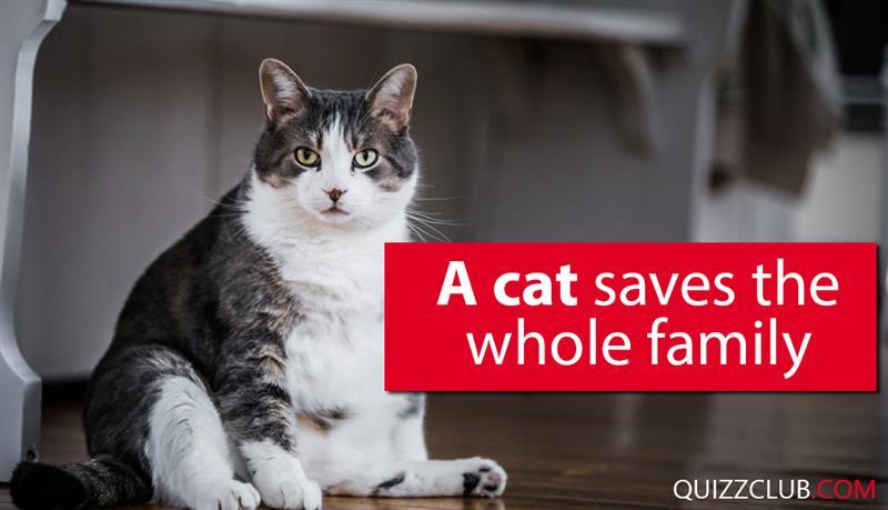 Society Story: A cat saves the whole family