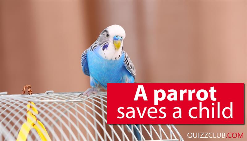 Society Story: A parrot saves a child