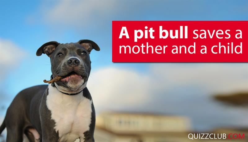 Society Story: A pit bull saves a mother and a child