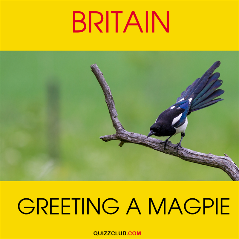 Geography Story: Britain: Greeting a magpie