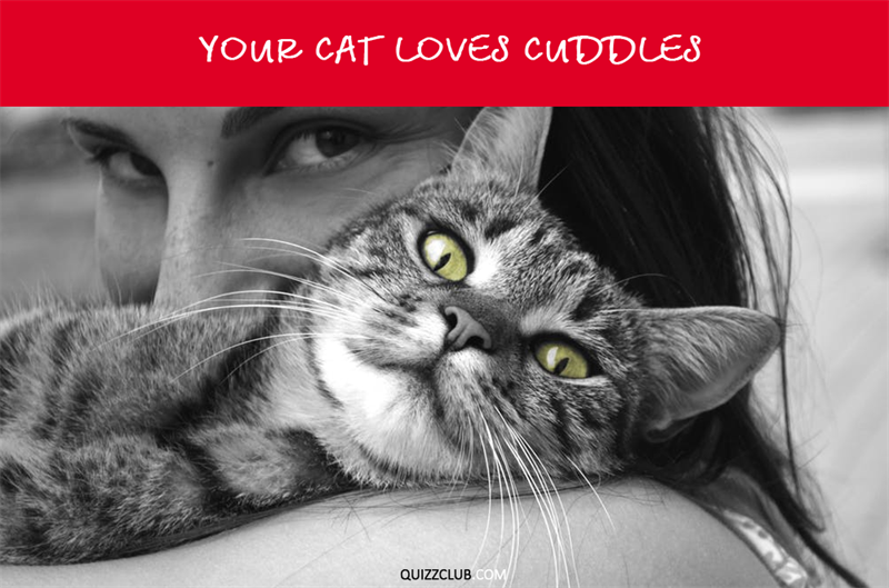 Nature Story: Your cat loves cuddles