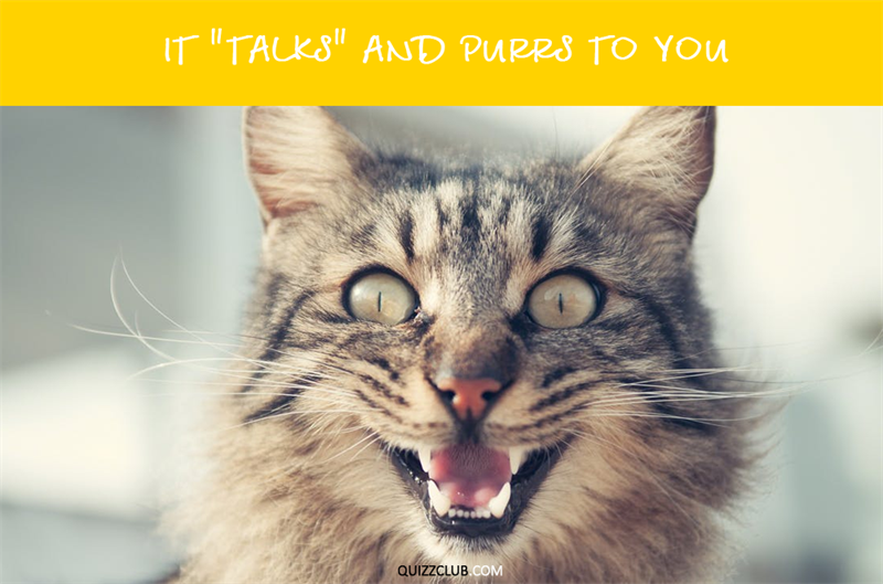 """Nature Story: It """"talks"""" and purrs to you."""