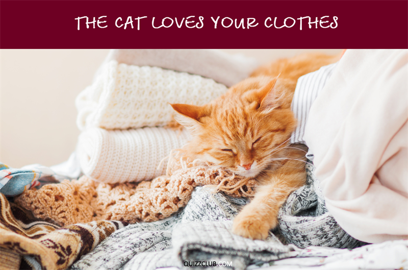 Nature Story: The cat loves your clothes