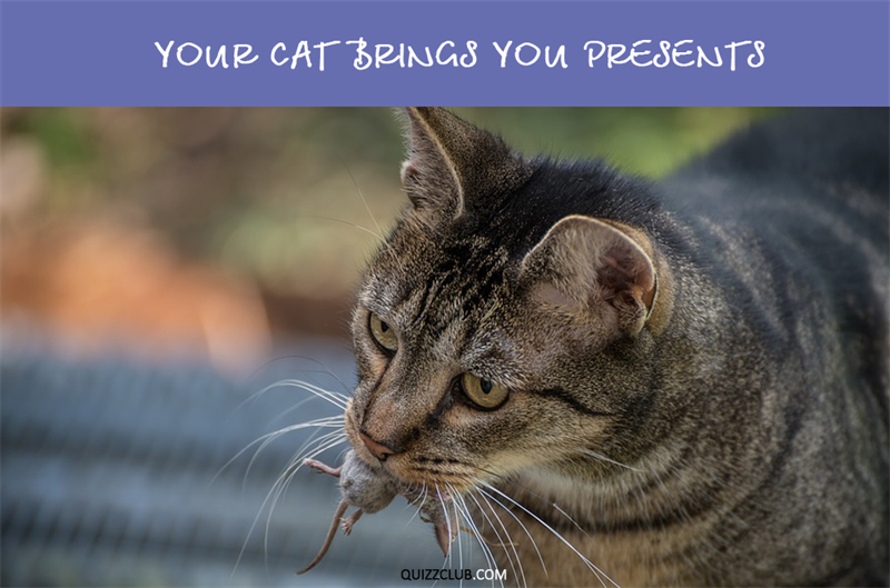 Nature Story: Your cat brings you presents
