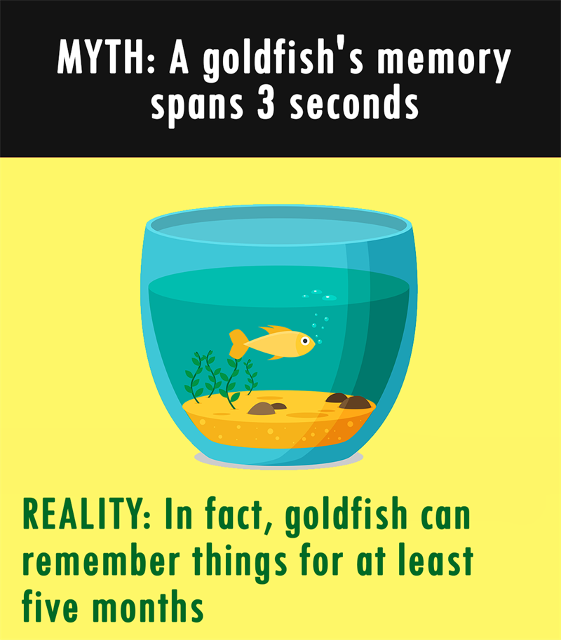 Nature Story: MYTH: A goldfish's memory spans 3 seconds. REALITY: In fact, goldfish can remember things for at least five months.
