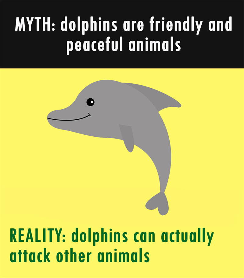 Nature Story: MYTH: dolphins are friendly and peaceful animals. REALITY: dolphins can actually attack other animals.