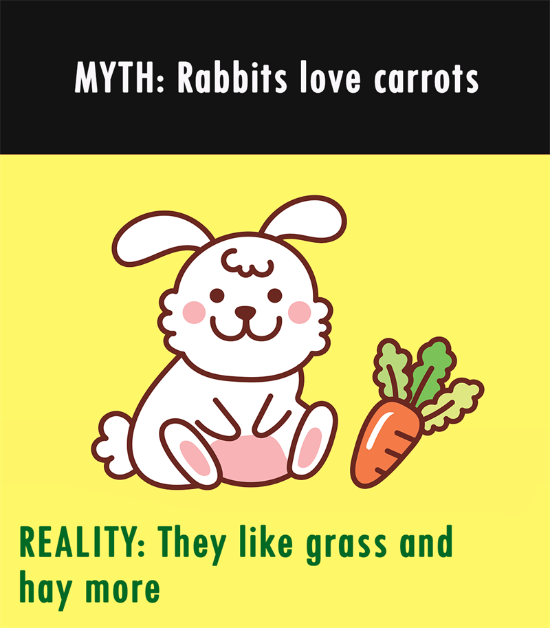 Nature Story: MYTH: Rabbits love carrots. REALITY: They like grass and hay more.