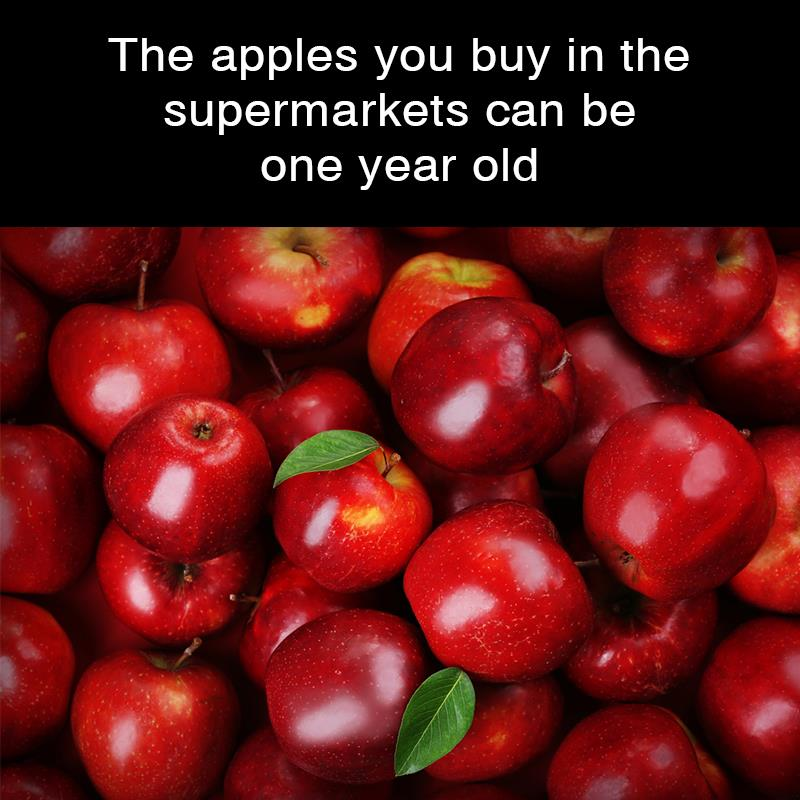 Geography Story: The apples you buy in the supermarkets can be one year old