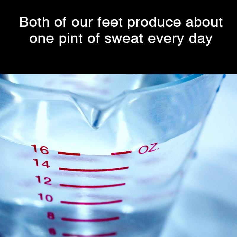 Geography Story: Both of our feet produce about one pint of sweat every day