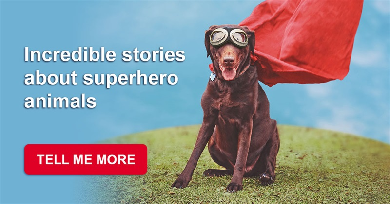 Society Story: 15 amazing stories about animals who saved people's life