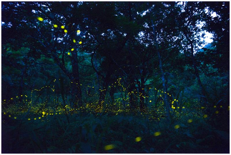Geography Story: #7 Fireflies Forest, Japan