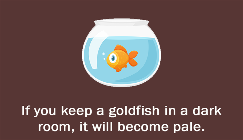 Culture Story: If you keep a goldfish in a dark room, it will become pale.
