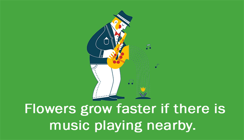Culture Story: Flowers grow faster if there is music playing nearby.
