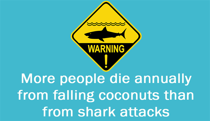 Culture Story: More people die annually from falling coconuts than from shark attacks.