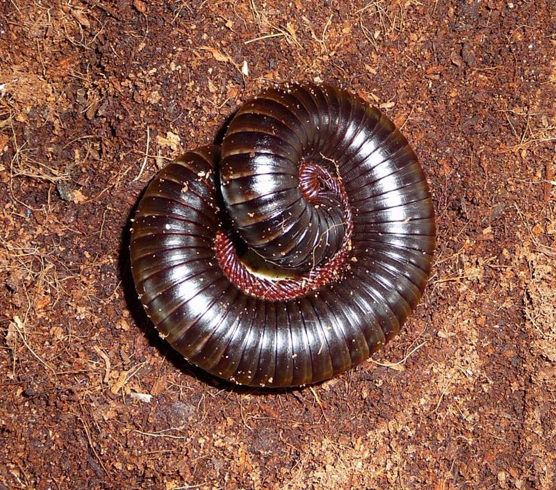 animals Story: #5 Some African earthworms may be up to 6 meters in length!
