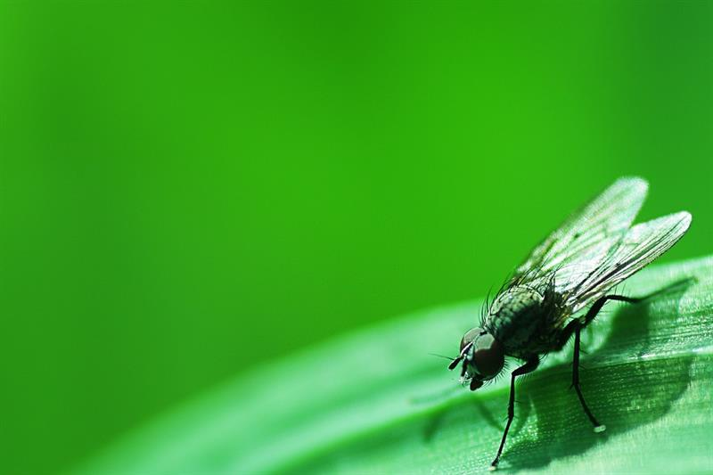 animals Story: #9 The average of a fly's life is not more than 2-3 weeks