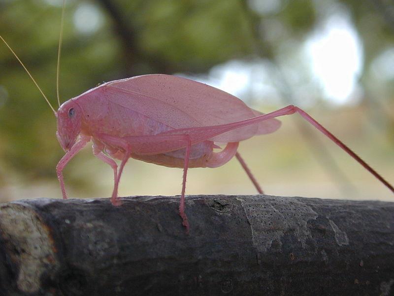animals Story: Katydid