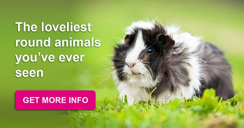 animals Story: Little fluffy balls - the loveliest round animals you've ever seen