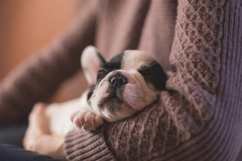 animals Story: Psychologists believe dogs are dreaming about their loving owners