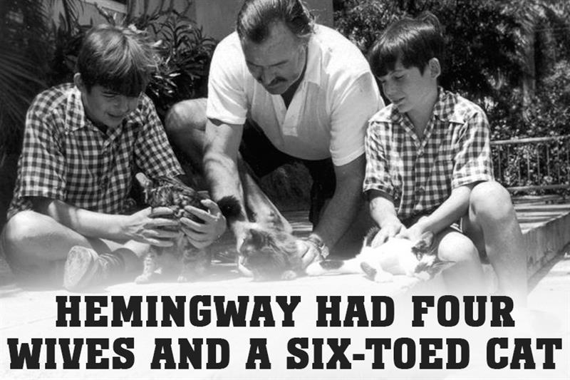 Culture Story: Hemingway had four wives and a six-toed cat.