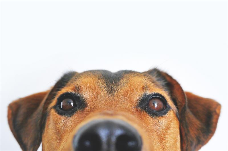 age Story: The easiest way to estimate human age of your pet