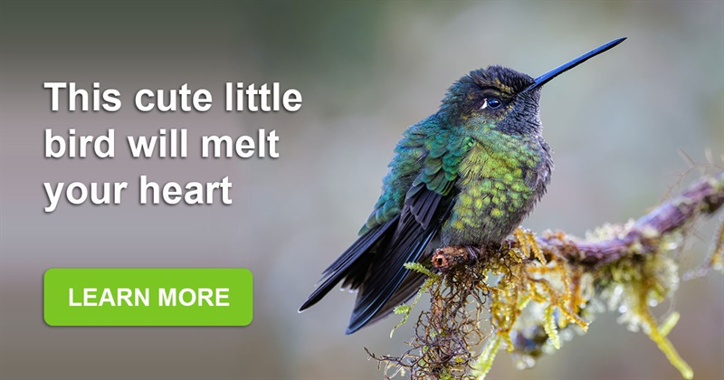 Geography Story: The hummingbird's snore is the cutest in the world!