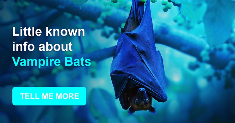 Nature Story: Vampires exist: little-known information about bats