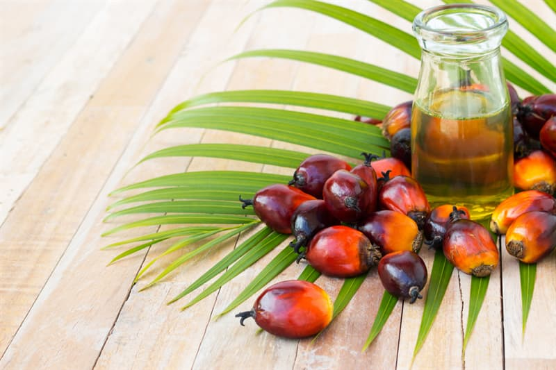 health Story: #9 Palm oil is no good