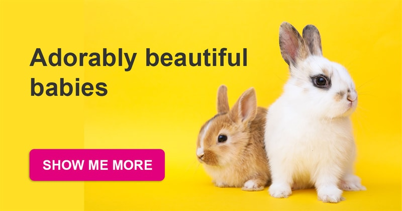 animals Story: The most adorable baby bunnies that will win your heart