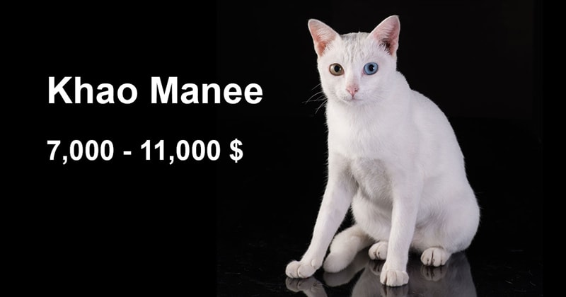 animals Story: The most expensive and gorgeous cat breeds #14