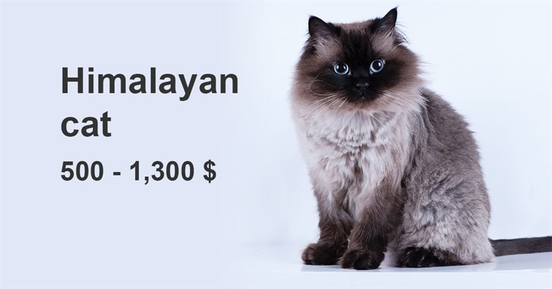 animals Story: The most expensive and gorgeous cat breeds #2