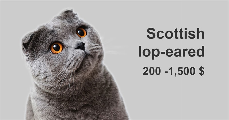 animals Story: The most expensive and gorgeous cat breeds #3