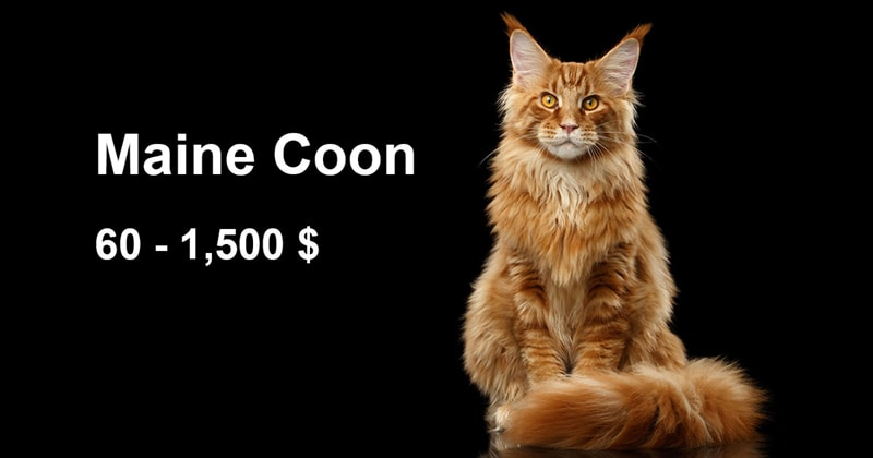 animals Story: The most expensive and gorgeous cat breeds #6