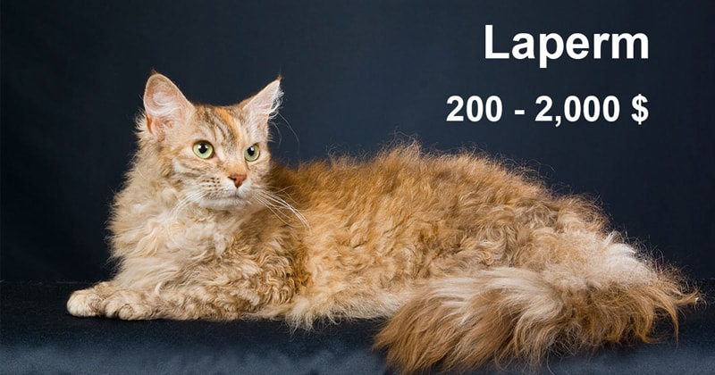 animals Story: The most expensive and gorgeous cat breeds #7